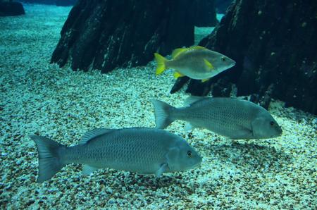 fondali marini: Pesci sul fondo del mare Archivio Fotografico