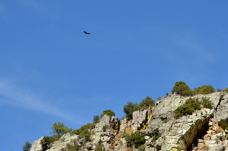 Vulture flying over the mountains