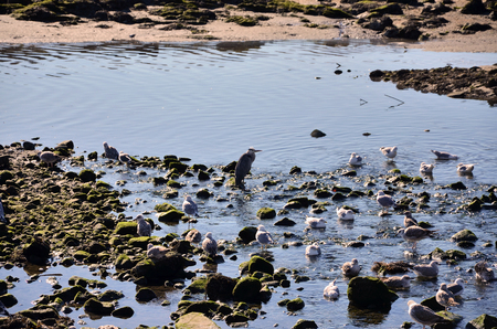 Birds in the riverbanks by low tide at sunset