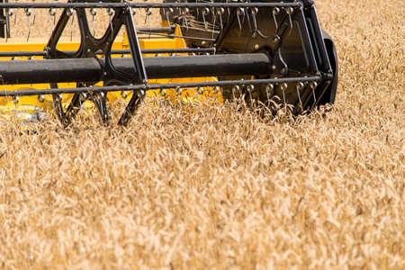 combine harvester: Carrete de la cosechadora.