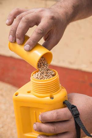 man operating a hygrometer, wheat