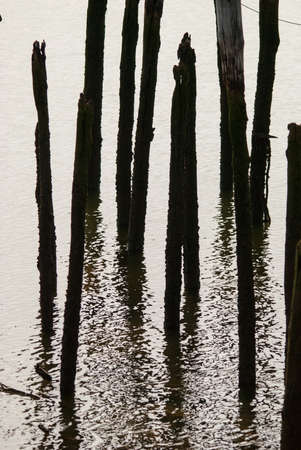 reverberation: lights and shadows of wooden posts in the water