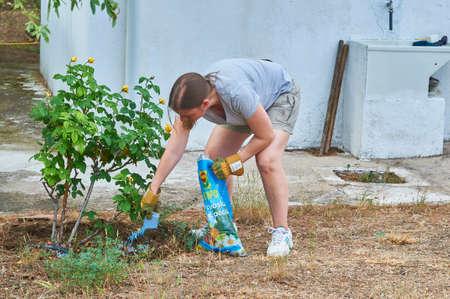 Woman fertilizing the soil of her rose bushes