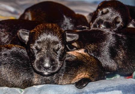 Cachorros  Foto de archivo - 71820079