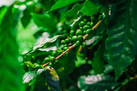 details in coffee plantation