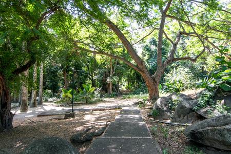 to shade: garden in the shade