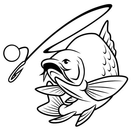 spigola: Salti pescare esche