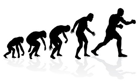 male boxer: Evolution of the Heavyweight Boxer. Great illustration of depicting the evolution of a male from ape to man to Heavyweight Boxer in silhouette.