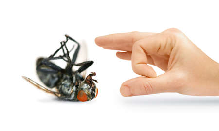 Give Pests The Flick With An Isolated Hand Flicking A Huge Dead Fly photo