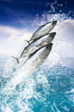 Three Fish Splash Out Of A Pristine Aquatic Ocean While Water Droplets Spray Skywards In A Holiday And Getaway Concept Titled Tropical Sea Escape photo