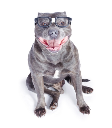 Cute dog wearing glasses or spectacles on white background photo