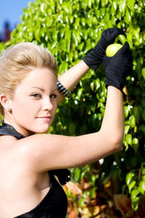 albero da frutto: Splendida Bene Donna Vestita sta al di fuori in un Apple Orchid raccolta della frutta da un albero di Mela