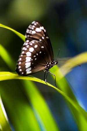 penetrate: Rays Of Light Penetrate A Rainforest Canopy, Illuminating The Patterns On A Tropical Butterfly Stock Photo