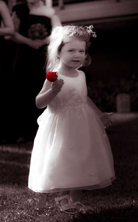 flowergirl: Little Two-Year-Old Girl Wearing White Flower Girl Dress And Carrying Red Rose With Cute Expression Of Happiness With An Outdoor Background