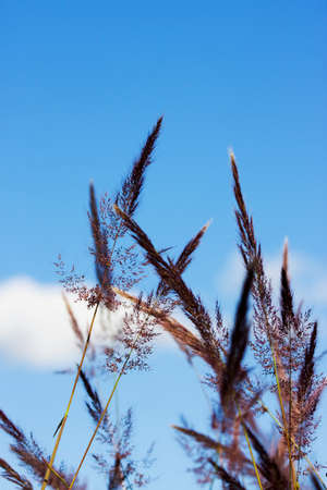 florets: Grass Florets Sway In A Brisk Autumn Breeze