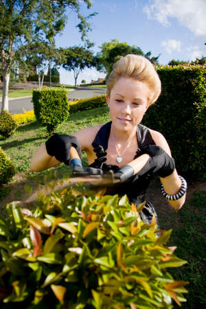 trimmers: Woman Standing In Her Front Garden With A Pair Of Gardening Shears Trimming A Garden Hedge Stock Photo
