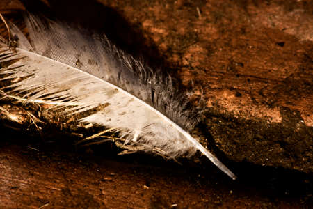 mucky: A Feather Lay In A Crevice Of A Cement Walkway, Discarded By The Lifecycle Of Nature