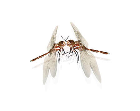 warmth: The Great Romanticism Is The Beautiful Warmth Of Dragonflies Kissing In A Mid Air Embrace