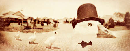 waddling: Textured Faded Creative Photograph Of 3 Geese Follow The Head Goose Wearing A Top Hat In A Vintage Panoramic Street Scenescape Of Leadership