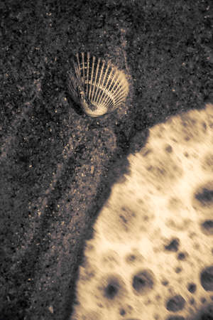 enviro: Duotone Image Of Waves Rushing To Meet A Seashell Resting On A Sandy Shoreline