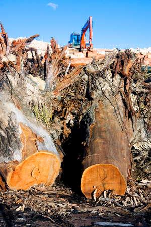 arbol de problemas: La destrucción del medio ambiente en la construcción con una pila de Chopped Camiones árbol en frente de un claro del sitio Desarrollo de la Tierra