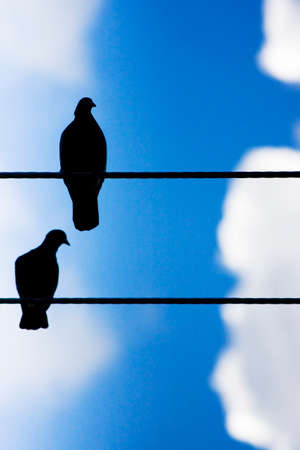 voltage: Silhouettes Of Two Birds Standing High On A Wire Stock Photo