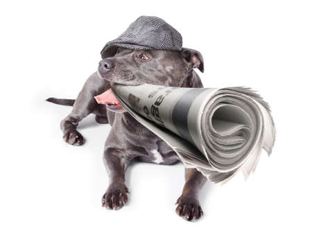 jaunty: Isolated newspaper dog wearing vintage flat cap while carrying latest print edition of the local news. White background
