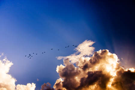 pierce: Birds Flying And Soaring High In The Sky As Sun Rays Pierce Atmospheric Clouds With Beams Of Bright Light