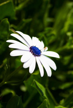 daisys: In Bloom And Flowering Forth Sweet Nectar A Purple Daisy Shoots Up From A Grassy Forest Floor Stock Photo