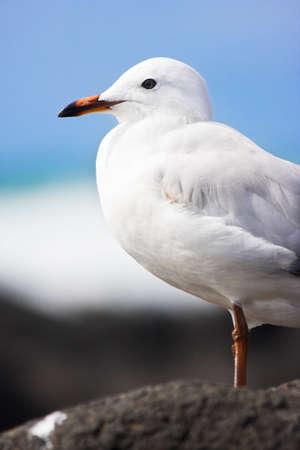 olas de mar: Océano Permanente Pájaro en un bulevar junto a la playa escuchando las olas del océano rodar en Calmar