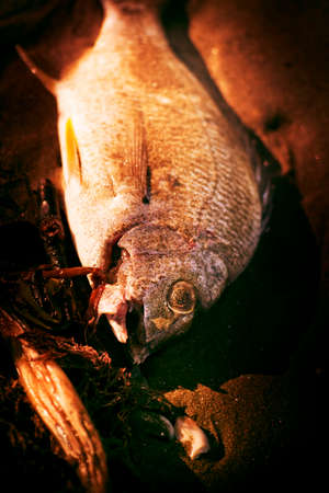 suspected: A Fishy Find With A Washed Up Fish On The Shoreline