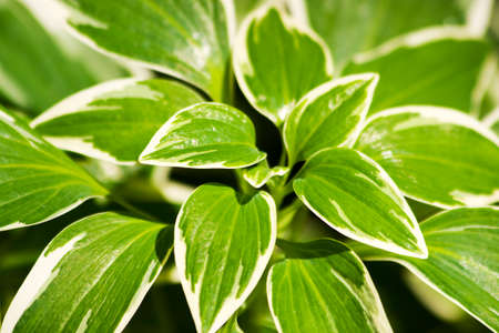 vegetation: Green Leaves Found In A Vegetation Undergrowth