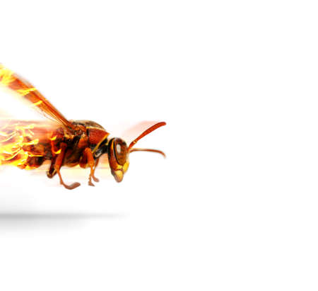 colouration: Depiction Of Fast Speed And Quick Pace With A Flaming Insect Wasp Flying At Scoring Velocity While Flames Of Fire Engulf His Rear, Isolated On White Background Stock Photo