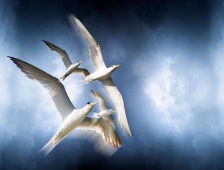 bandada pajaros: La libertad está representada por el Movimiento Movimiento y grácil vuelo de los pájaros Soaring O Flying High Above En El Cielo Azul Nublado encima Foto de archivo