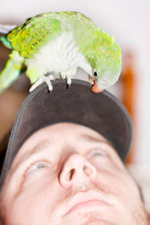 chit chat: Bird Squawks In Bird Conversation To A Man While Standing On His Cap Indoors In A Talking To The Animals Image