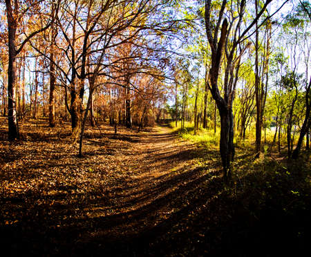 demarcation: Landscape Image Of A Forest Path Separating Brown Autumn Trees From Green Summer Trees In A Depiction Of Dividing Seasons Stock Photo