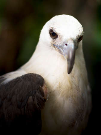head of animal: Focus On The Face Of A White Eagles Head
