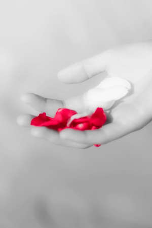 soft pedal: Soft Focus On A Hand Holding Red Rose Petals At A Wedding Celebration
