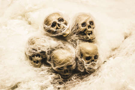 grisly: Creepy still-life photography on morbid skulls covered in spooky halloween spiderwebs Stock Photo