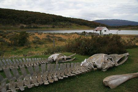fuego: Whale skeletons at Estancia Harberton near Ushuaia, Tierra del Fuego