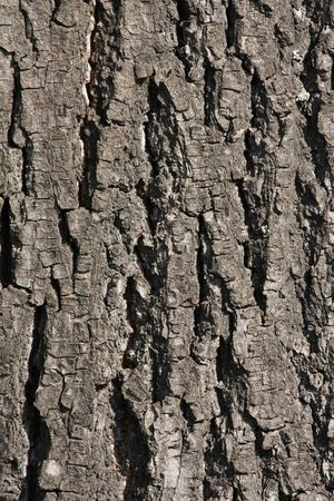 brak: Background of bark from a tree Stock Photo