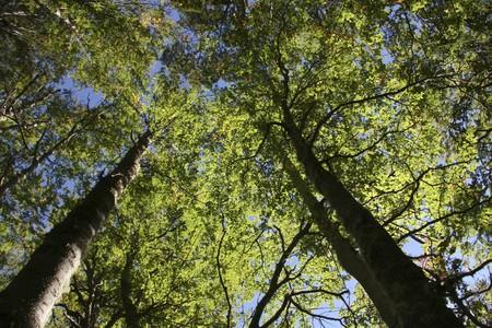 fuego: Beech trees in National Park Tierra del Fuego in Ushuaia, Argentina