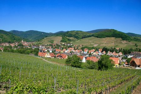 des vins: Village surrounded by vineyards in the Alsace Region of France at the Route des vins (Wine Route)