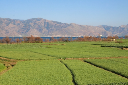 Lush green rice fields in Dali, Yunnan province, China photo