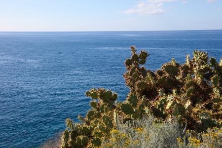 adeje: Cactus landscape and Atlantic Ocean at Costa Adeje in Tenerife, Canary Islands, Spain. Stock Photo