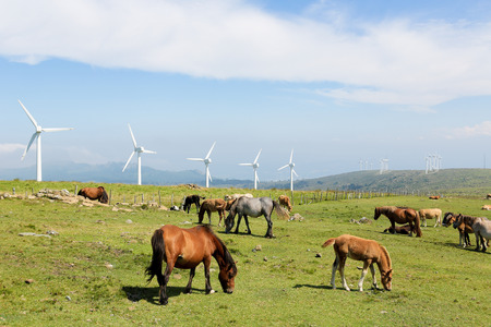 onshore: Onshore wind turbine farm in the Northern part of Galicia, Spain. Stock Photo