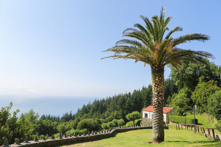 palmtree: Beautiful landscape with palmtree and house in San Andres, Galicia, Spain Stock Photo