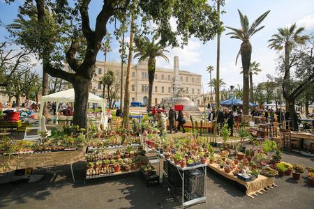 fleamarket: MARTINA FRANCA, ITALY - MARCH 15, 2015: Flea market with an assortment of cactuses at the Piazza Vittorio Veneto in the center of Martina Franca, Taranto province, South Italy.