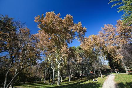 parque del buen retiro: MADRID, SPAIN - NOVEMBER 14, 2015: The Buen Retiro Park is one of the main attractions of Madrid, Spain.