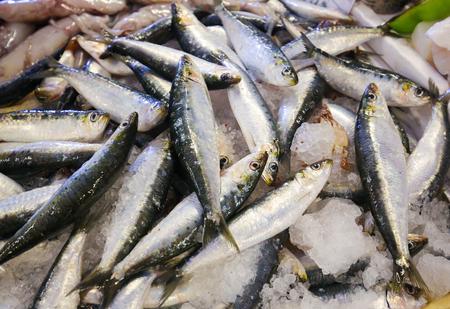 Assortment of fresh sardines in the fish market of Costa Nova, Aveiro, Centro, Portugal